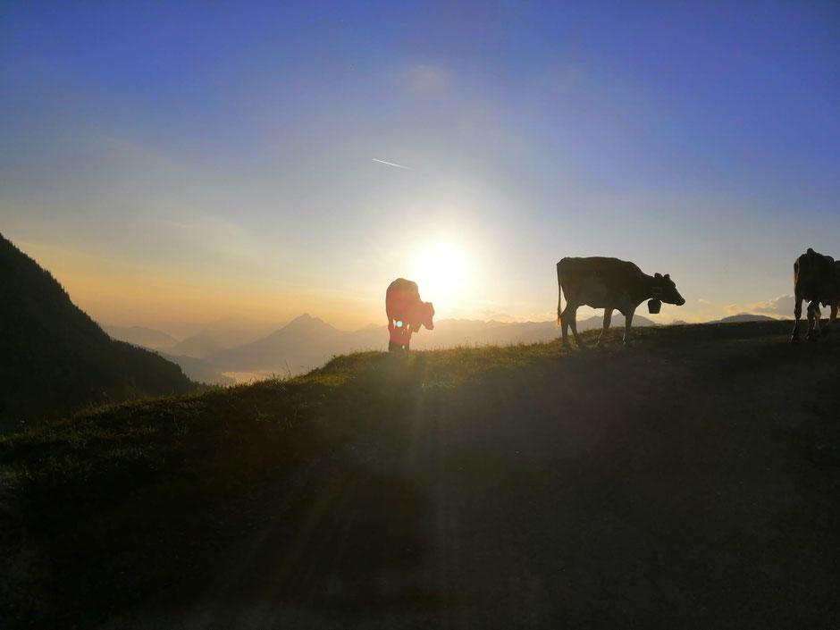 Fluonalp Sonnenaufgang