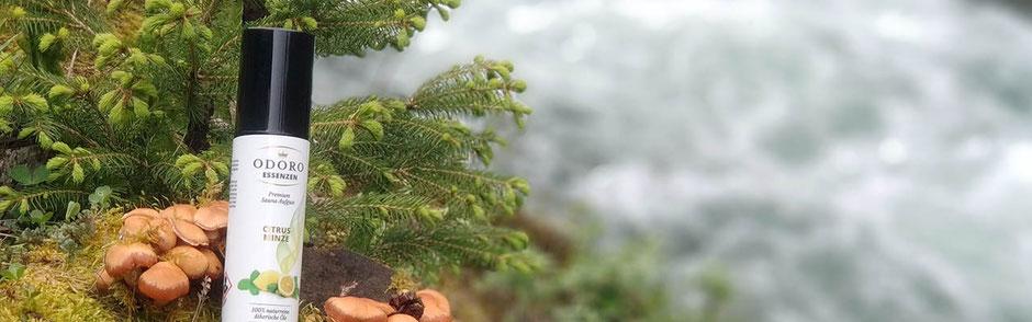Saunaaufguss Fichtennadel Kiefernadel Cedar