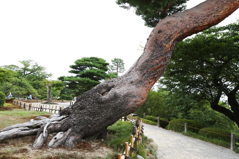 訪日観光客、インバウンド・ブーム、Japan、tokyo、osaka、kyoto、biccamera、kanazawa