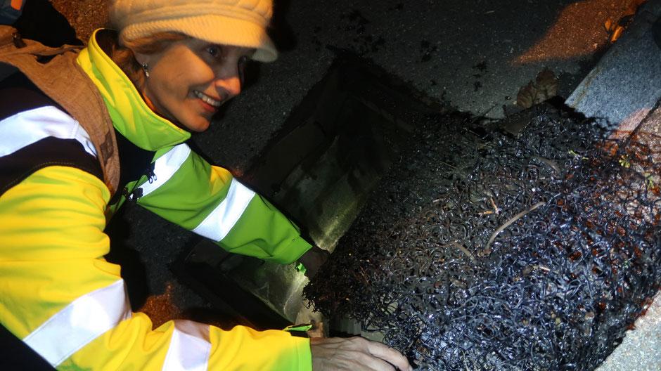 Christina Feierabend zeigt uns das schwarze Geflecht (rechts im Bild), das für die Amphiben als Leiter dient, um aus den Schächten zu kommen.