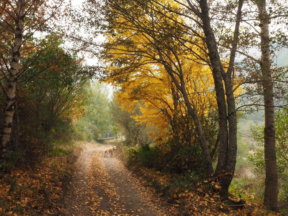 """Camino de Rioseco, saliendo de Candín hacia """"A Fonte y Cascada de Fumeixín"""" (Candín, Bierzo, León) Octubre 2017"""