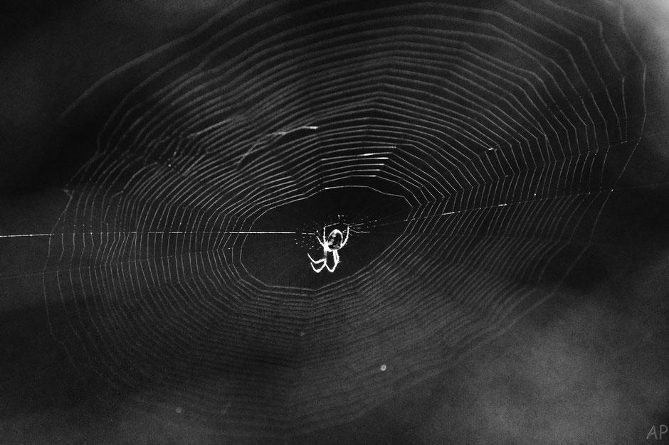 toile, araignée