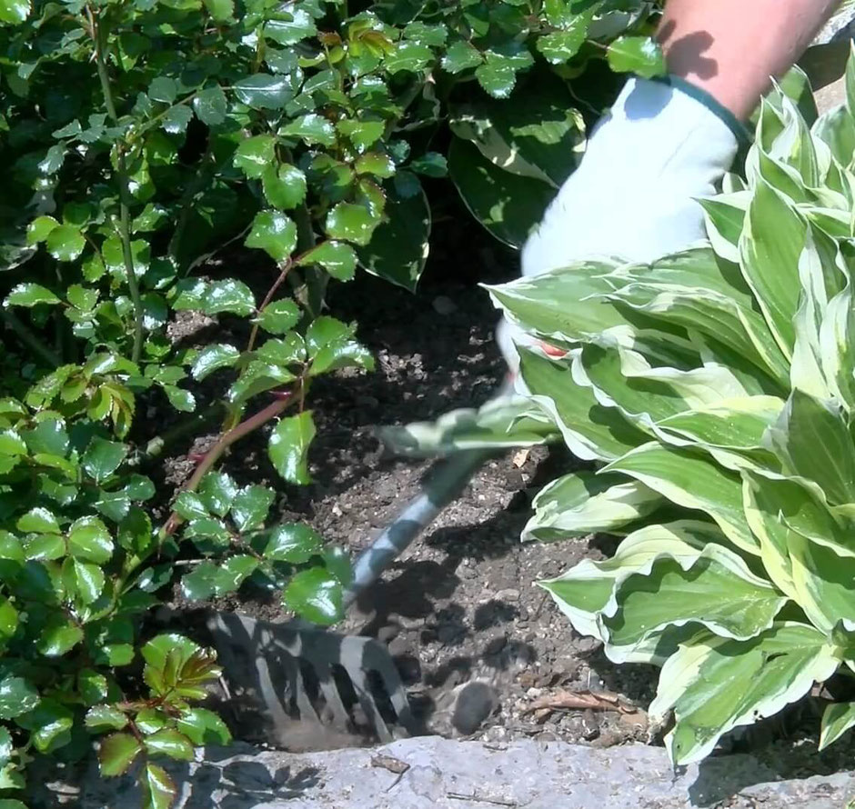 Bevor man das Beet mulcht, müssen zuerst alle Wildkräuter entfernt werden. Dann sollte man den Boden lockern, damit Wasser gut in die Krume eindringen kann.