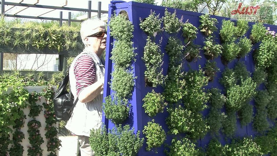 Nun ist der eigene Garten auch auf dem Balkon möglich. Diese trapezförmigen Wände müssen nicht befestigt werden und können sogar beidseitig bepflanzt werden. Im Schattenbereich eignen sich Farne - oder für die Sonne Kräuter und Gemüse.
