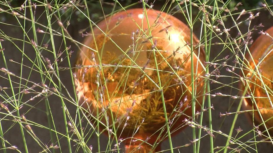 Die Rutenhirse Hänse Herms (Panicum virgatum) bezaubert mit zarten, vielfach verzweigten Halmen und rötlichen Blüten.