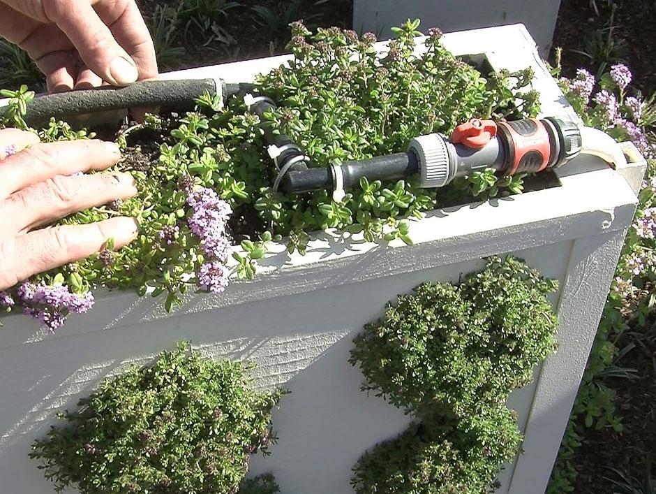 Die Wandbegrünungs-Elemente sind mit einem Bewässerungssystem von Gardena bestückt. Über den roten, drehbaren Druckminderer kann die Wasserzufuhr gesteuert werden. Die Wassertröpfchen treten am schwarzen Perlschlauch aus.