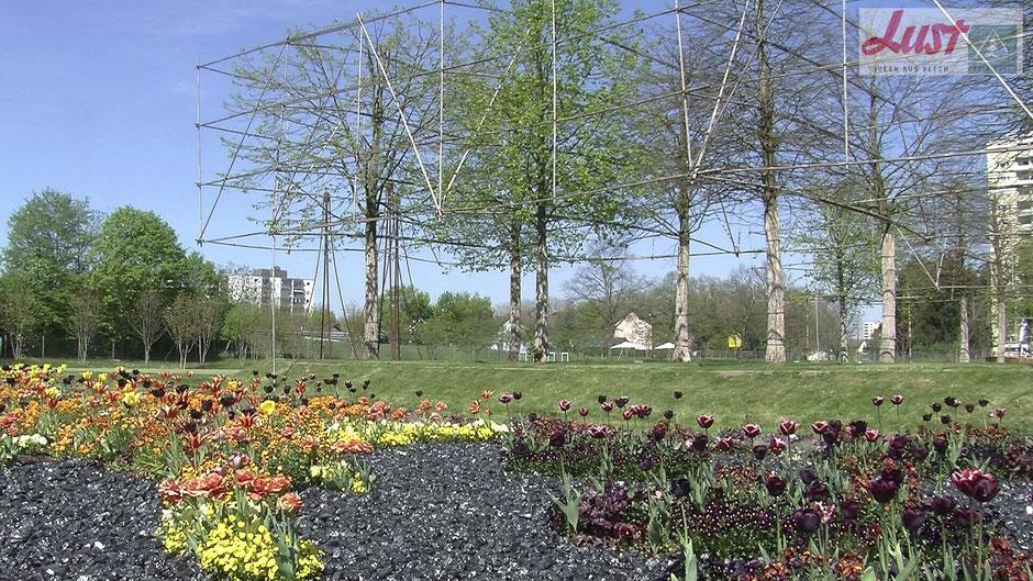 Im Bürgerpark auf der Landesgartenschau in Lahr stehen seltsam umbaute Bäume. Diese stehen symbolisch für ein römisches Dorf, welches hier vor ca. 2.000 Jahren existiert hat.