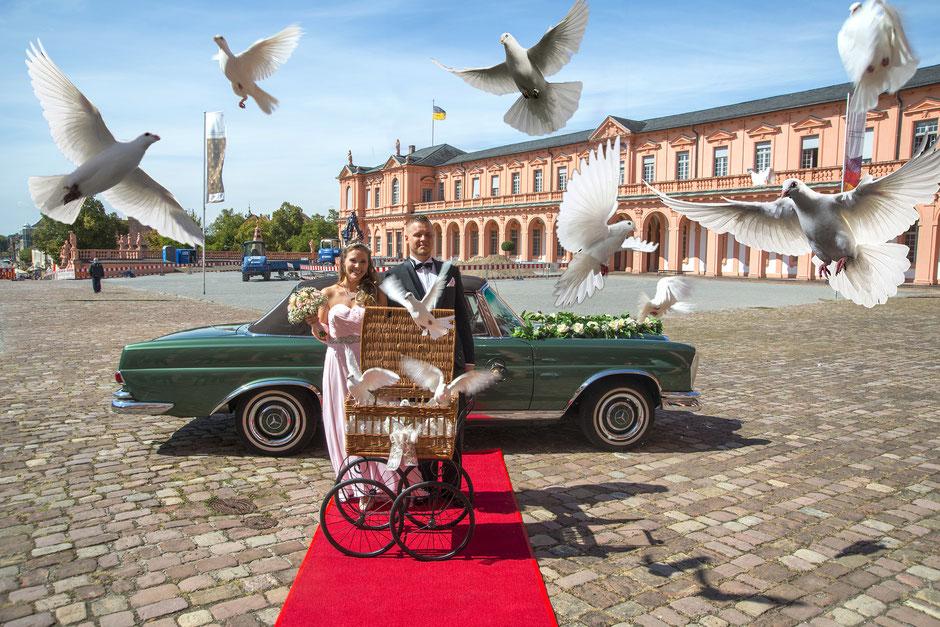 Klasse Hochzeitsfotograf Rastatt Baden-Baden Fotos und Videos zur Hochzeit