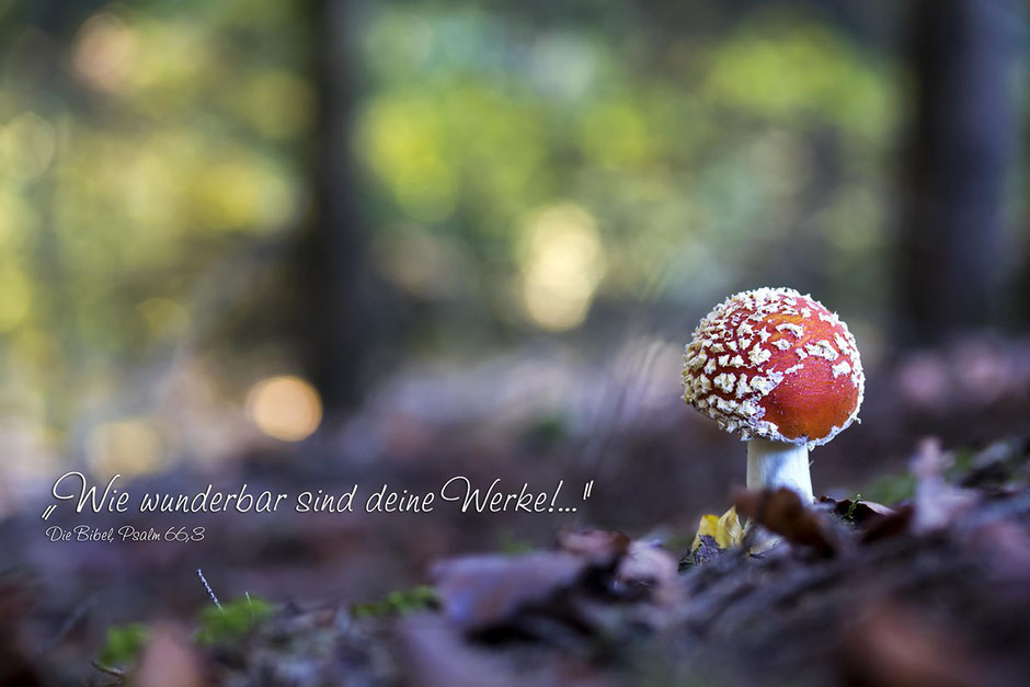 Fliegenpilz im Wald, Christliche Spruchkarten, Psalm 66