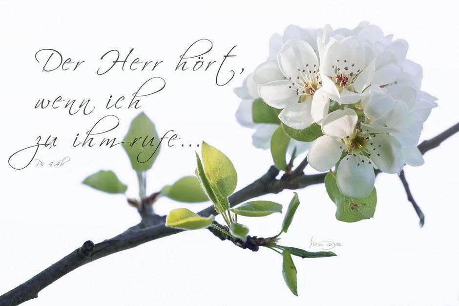 Gartenbirne mit Bibelvers, Psalm 4