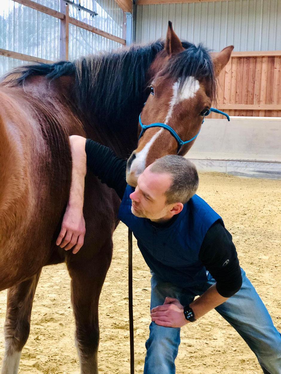 Braucht mein Pferd Faszien Therapie?