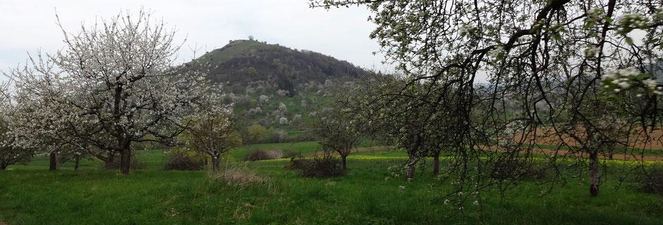 Blick auf die Limburg