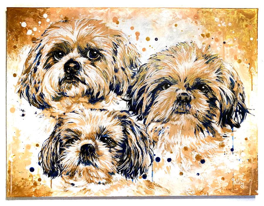 Shi Tzu Hunde Portrait gemalt Acrylfarbe auf Leinwand goldfarbe