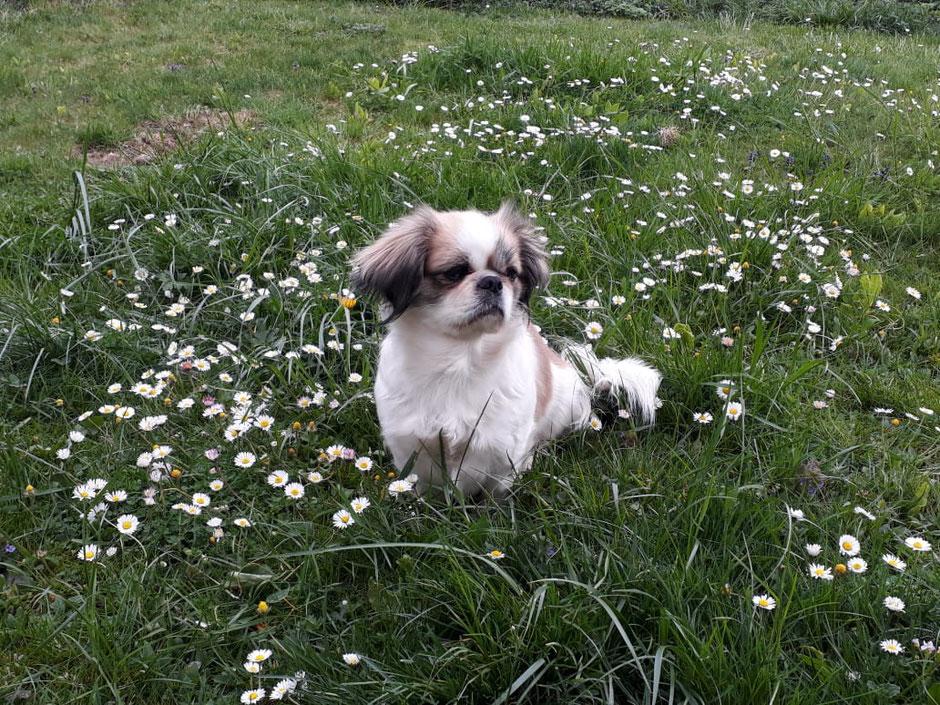 Portrait von Hund Sophie