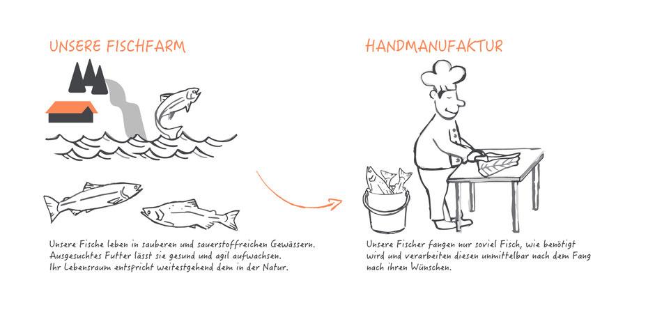 Fischfarm - Aufzucht der Lachsforellen und Regenbogenforellen, einfach erklärt.