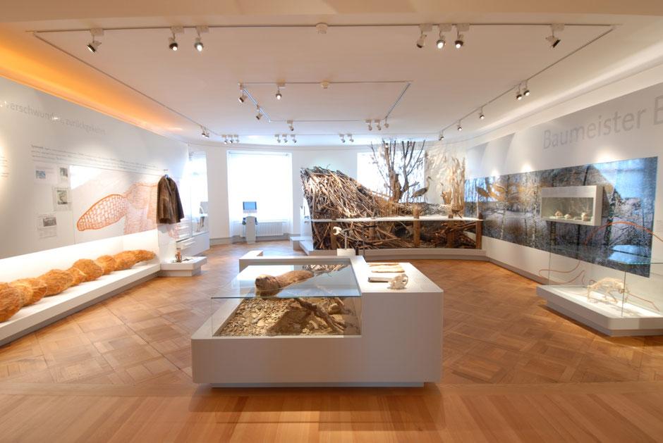 ©Naturmuseum Thurgau