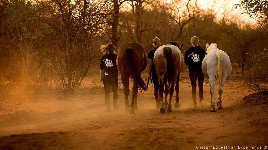 Horse riding at sunset in South Africa