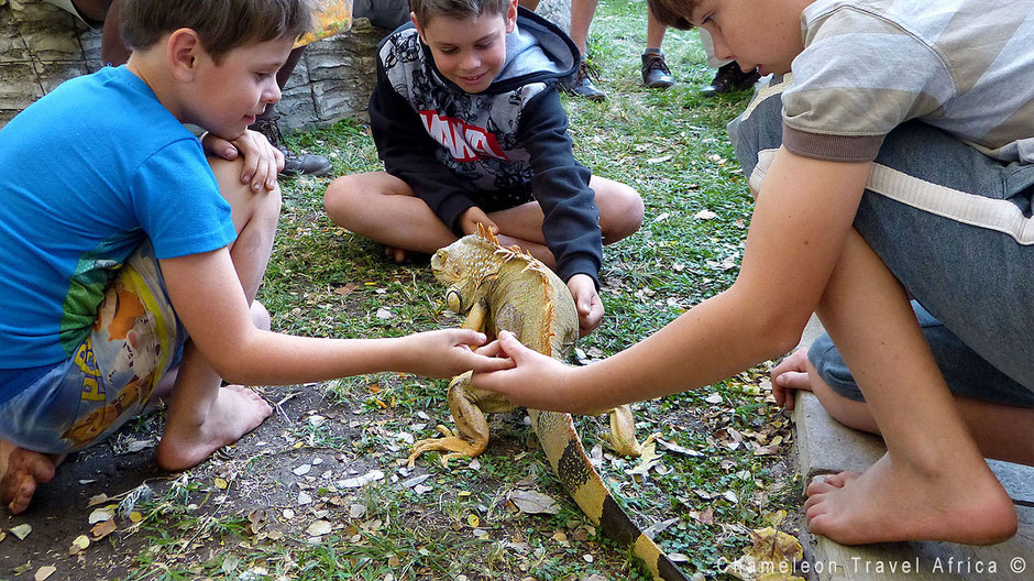 Kids learning all about reptiles