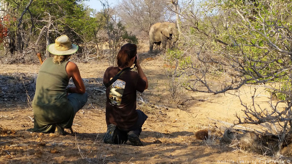 Volunteer and elephant in the bush in South Africa
