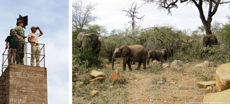 Hide and elephants