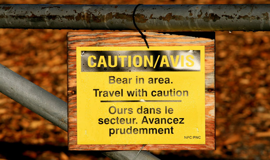 Bear Caution Bear in area