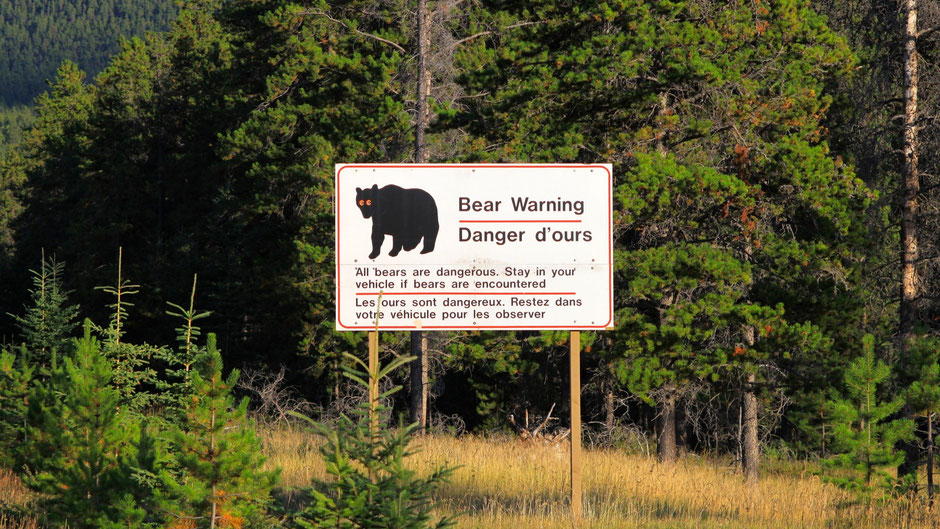 Bear Warning, Jasper Nationalpark