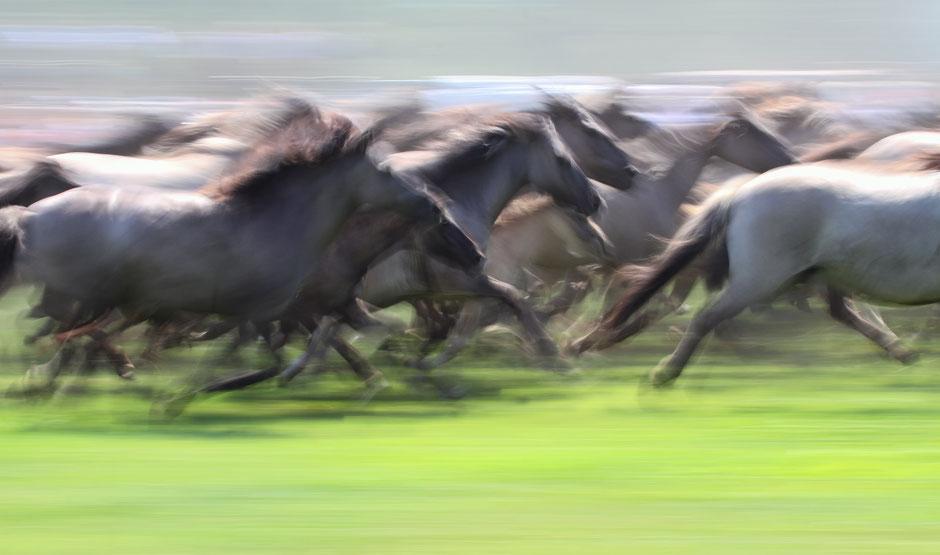 Cavalli Nr. 02