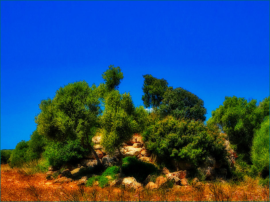 Talaiot de ses Llenques. a pocos metros de la carretera Artá - Colònia de St. Pere.