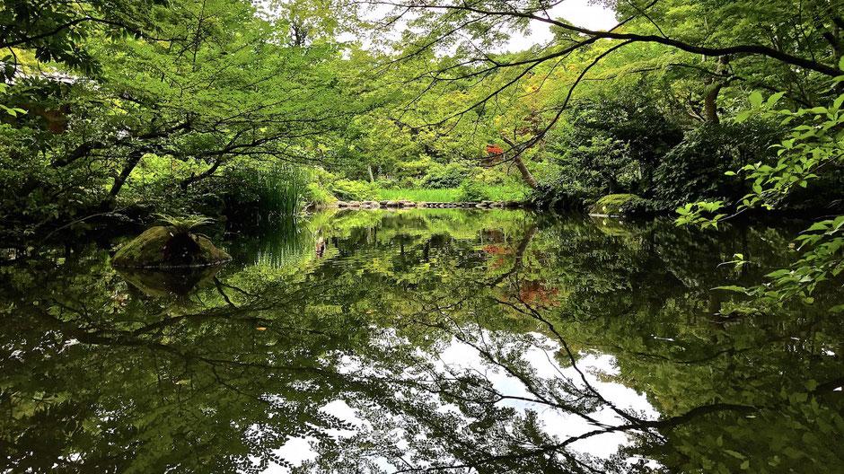 根津美術館庭園 八つ橋の池