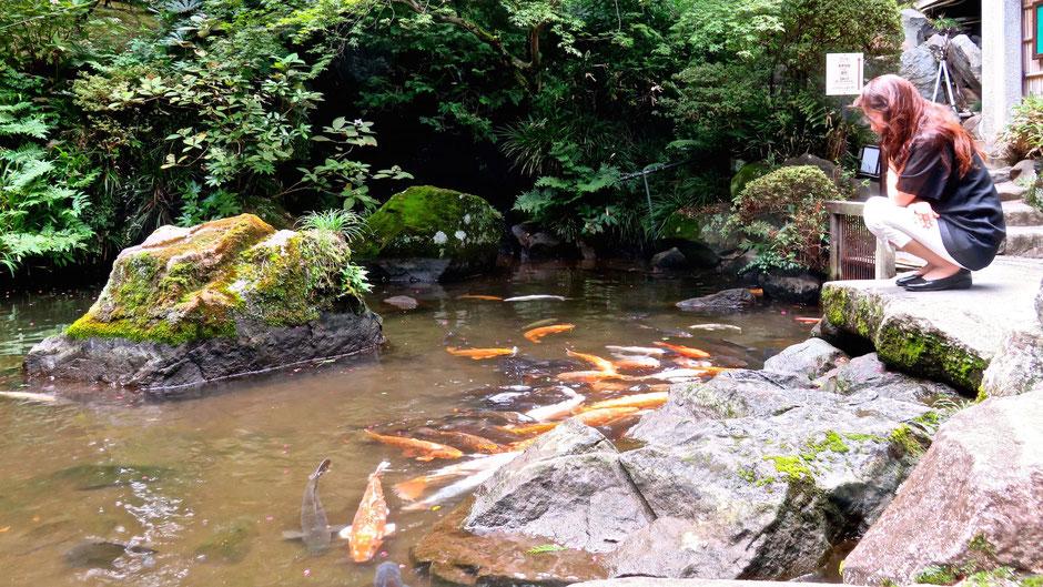 富士屋ホテル 日本庭園