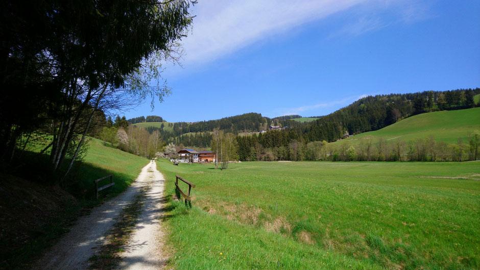 Feistritztalradweg, R8, Wiesen und Wälder