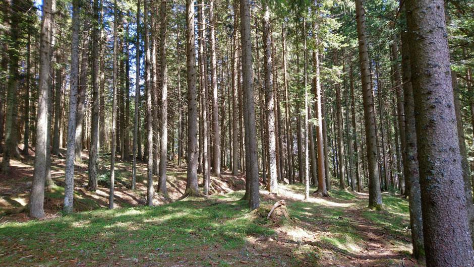 Wald, Waldheimat, Bäume, Waldboden
