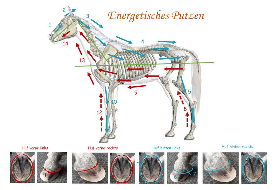 Pferd energetisch putzen