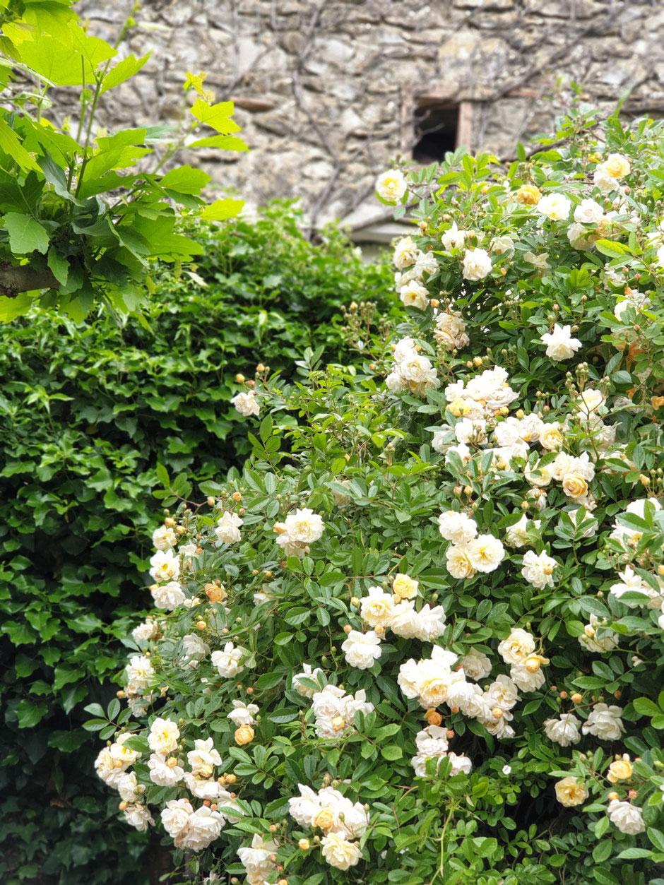 Beaucoup de roses surtout au mois de mai.
