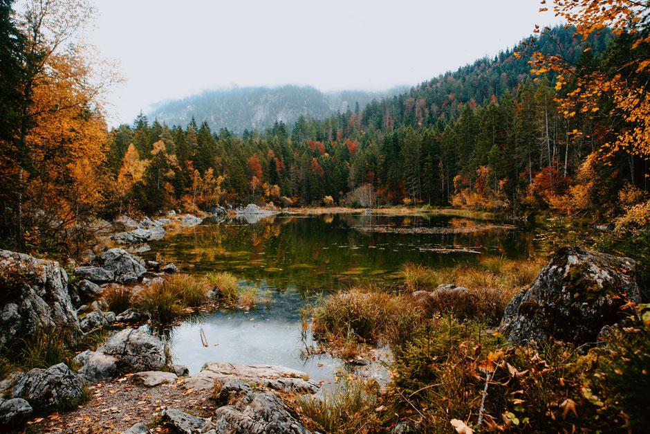 cow switzerland grindelwald travel zwitserland fondue photography mountains