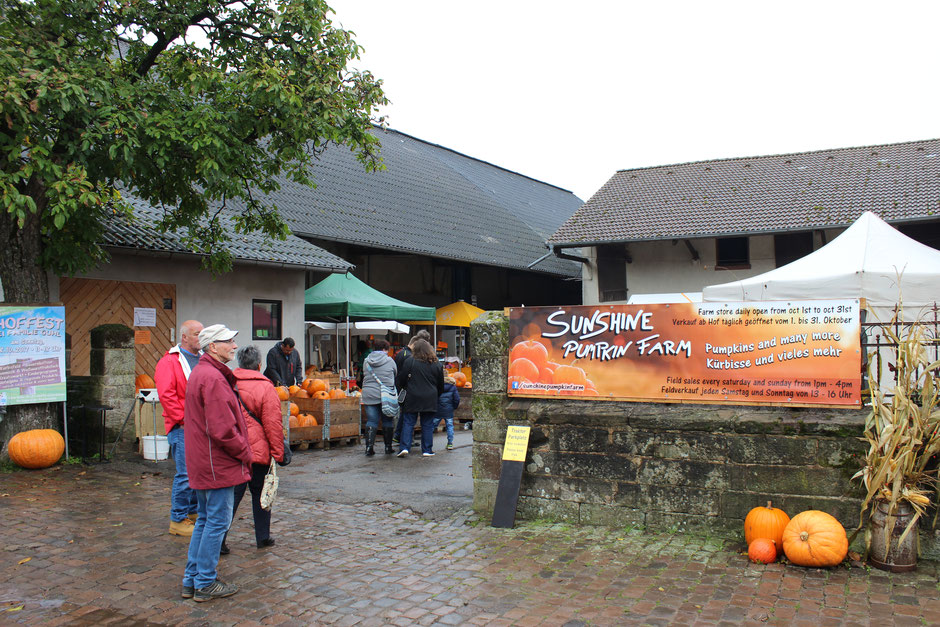 Pumpkins are also available on our farm - Bauernhof Guhl
