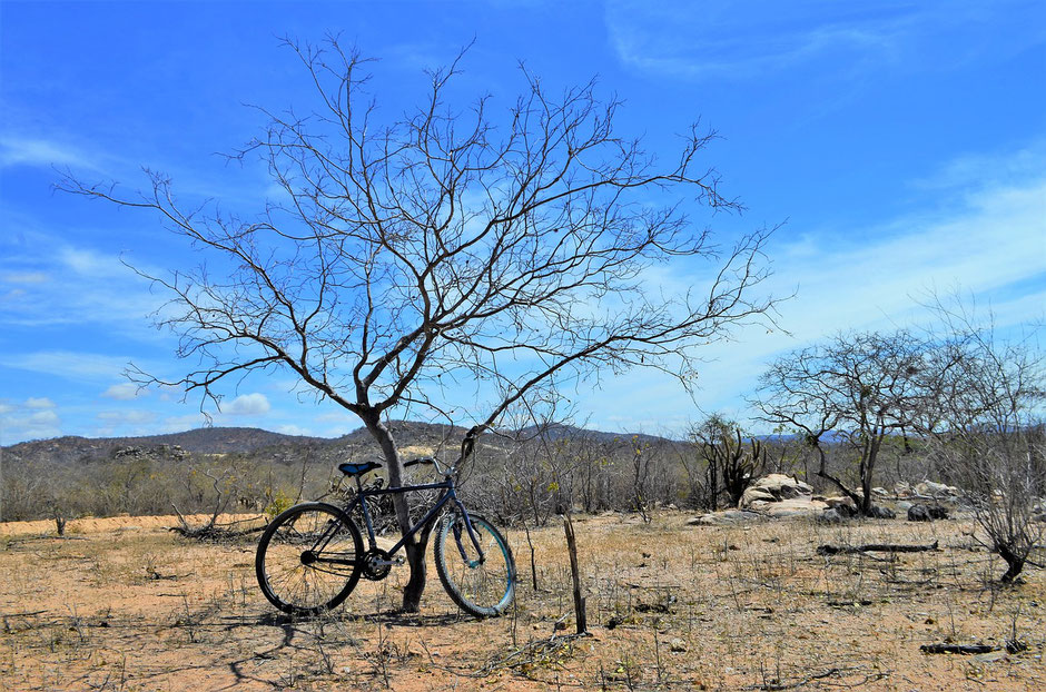 Vélo posé sur un arbre dé-séché.