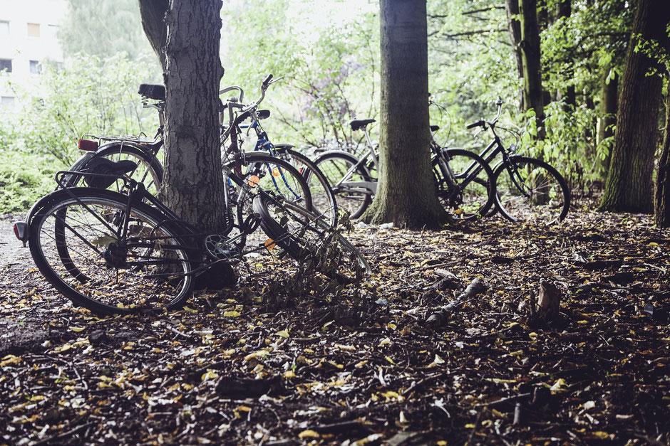 Velos dans les bois