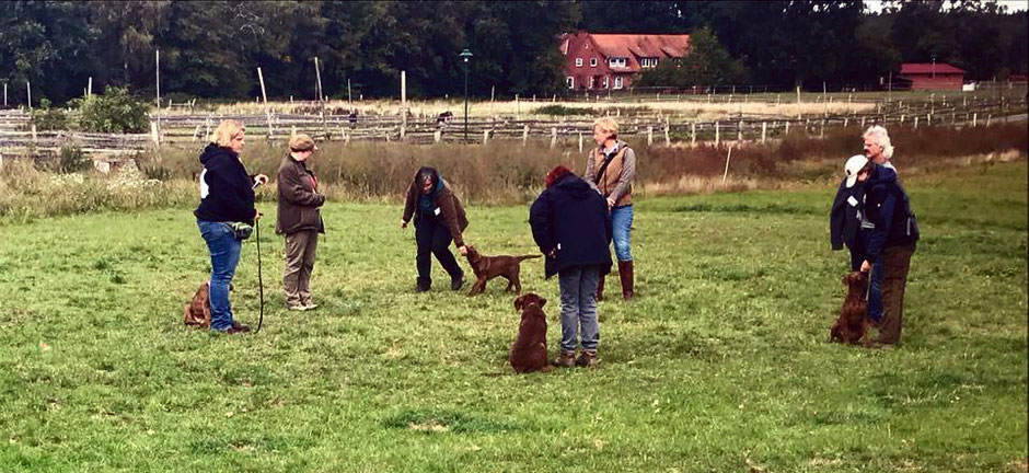 Chesapeake Bay Retriever Welpen Training CBR