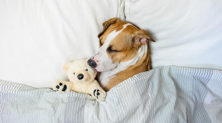 orthopädisches hundebett, orthopädisches bett für hunde