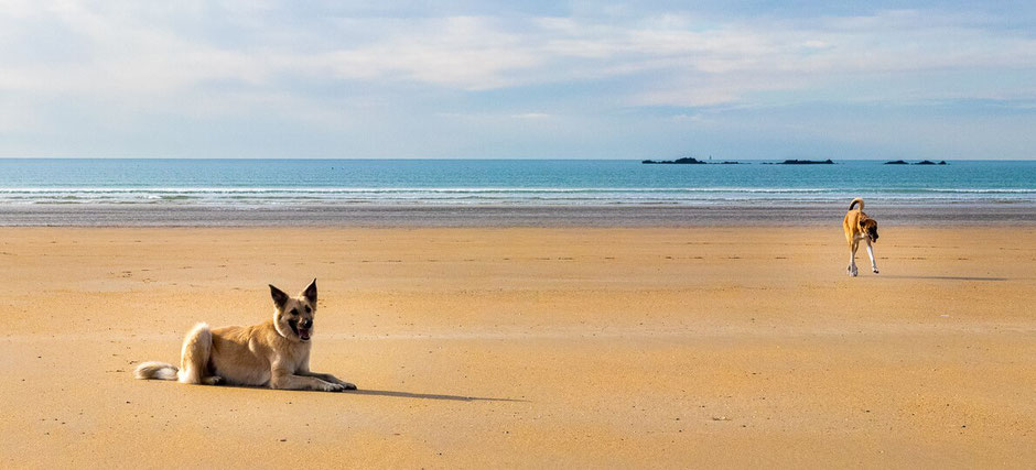 Wohnmobil urlaub mit Hund