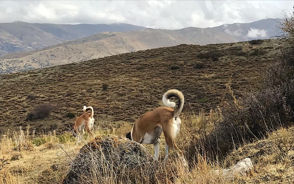 Camping mit Hund, Sierra Nevada