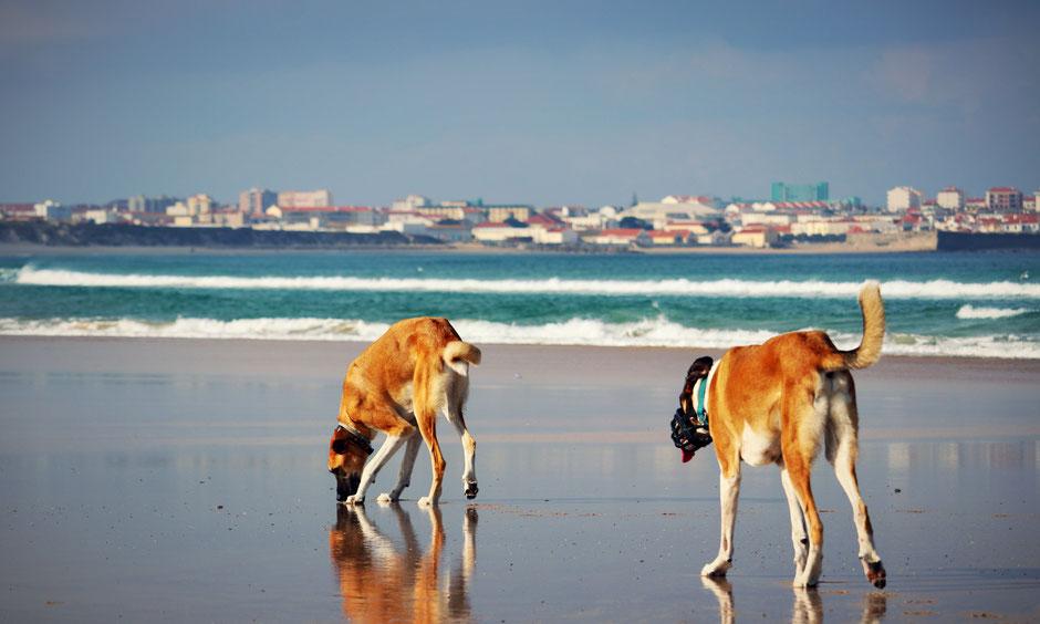 Urlaub mit Hund, Camping mit Hund, Reisen mit Hund. Mittelmeerkrankheiten