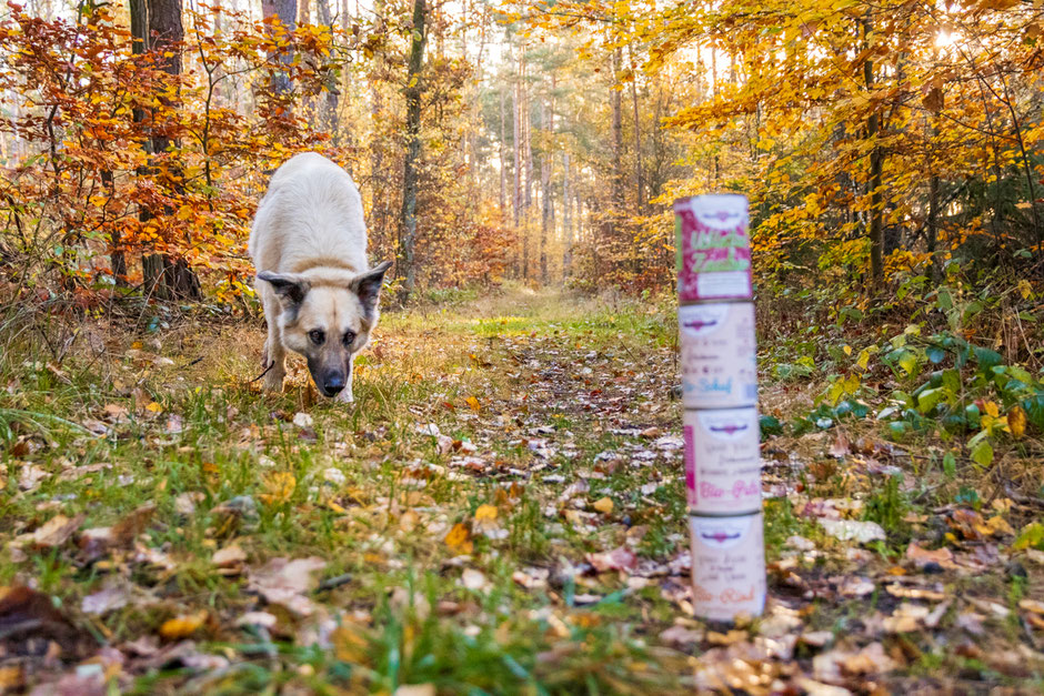 Bio Hundefutter, barfen, Hundefutter, Hundeernährung, HerzensHund