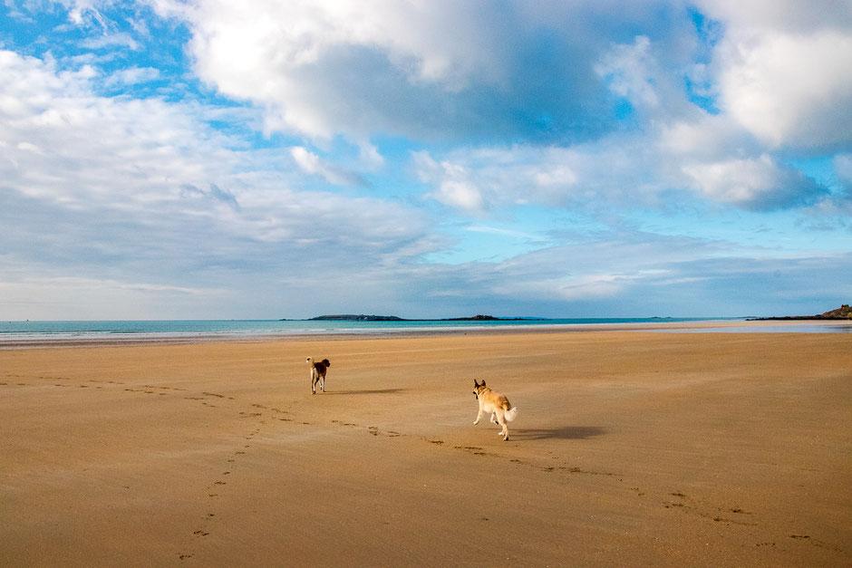 Mit dem Wohnmobil durch die Normandie, camping mit hund, wohnmobil urlaub mit hund