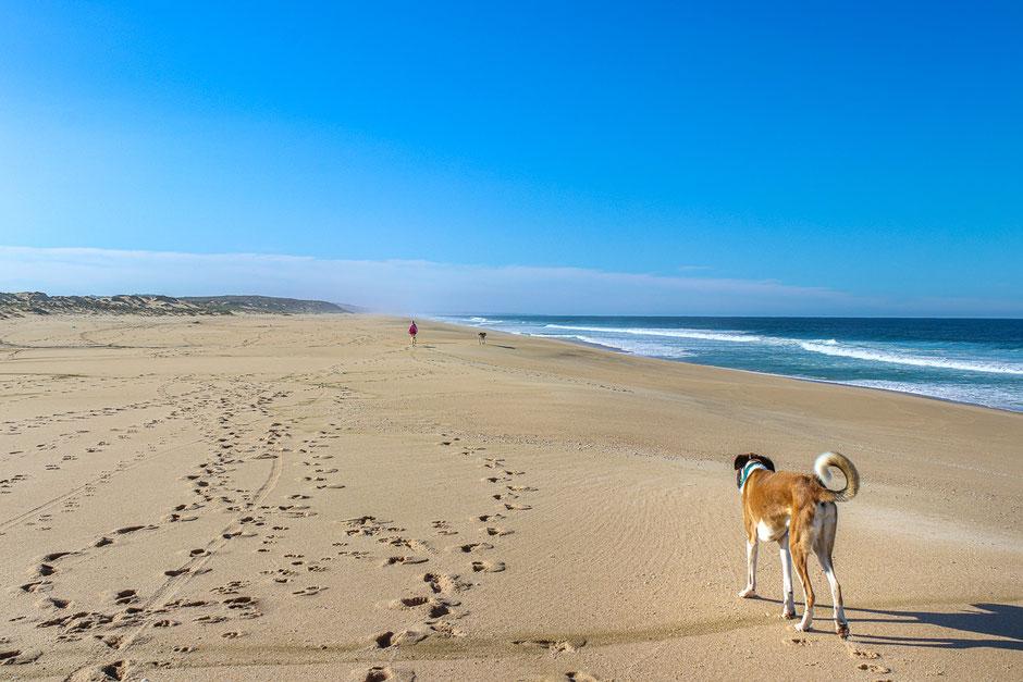 Wohnmobil Urlaub mit Hund in Portugal, Camping mit Hund