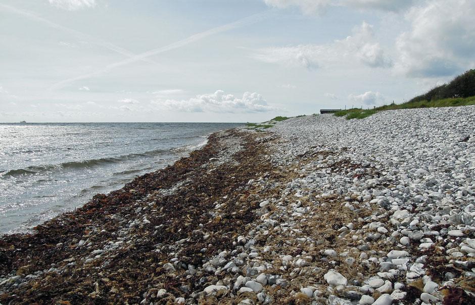 "Am ""Hausstrand"" von Nordisk Tang: Fornæs Strand bei Grenå. Foto: Christoph Schumann"