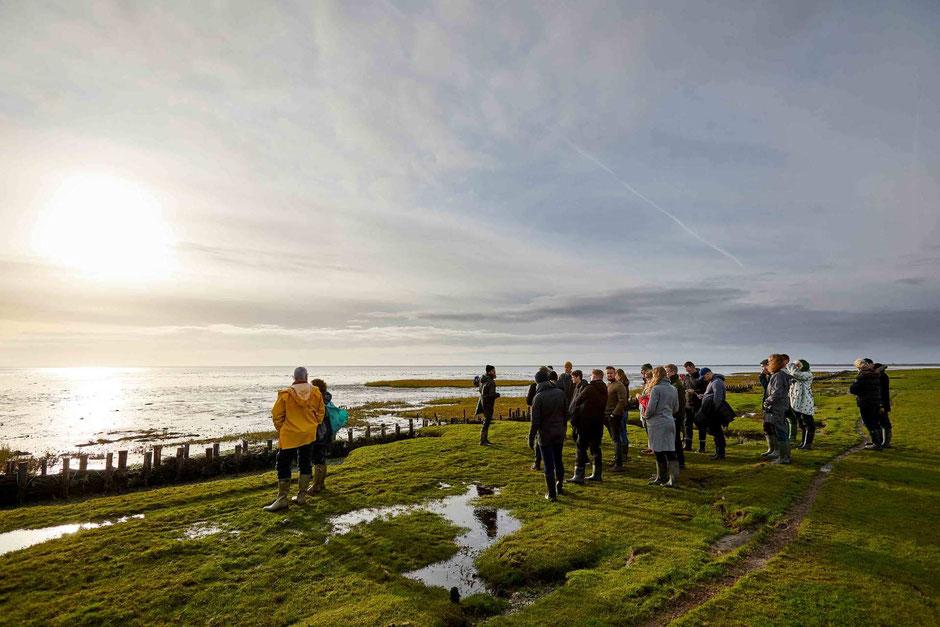 Austernsafari im dänischen Wattenmeer. Foto: Søren Gammelmark & Danmarks Østersfestival