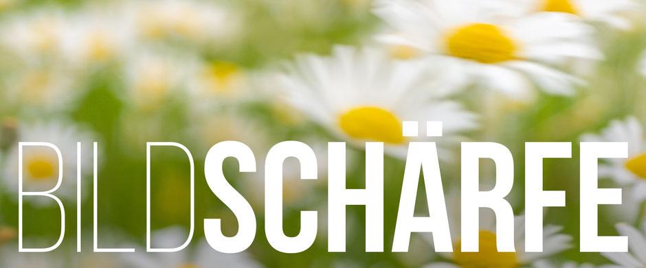 Banner, Bildschärfe, Sommerwiese, Dr. Ralph Oehlmann, Oehlmann-Photography