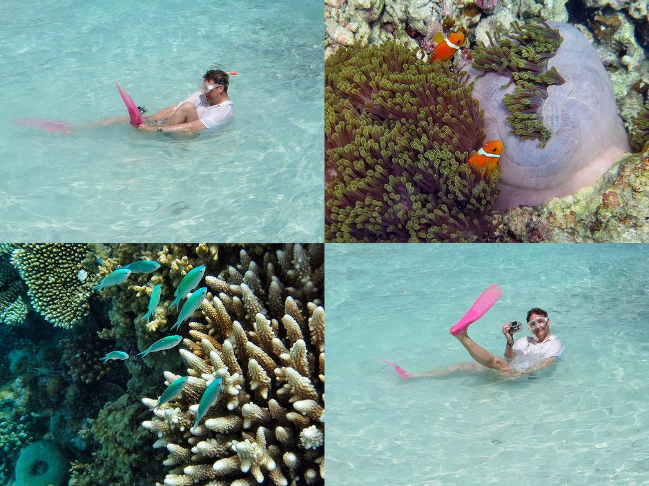 Embudu, Malediven, Schnorcheln, Unterwasserkamera, Unterwasseraufnahmen, Dr. Ralph Oehlmann, Oehlmann-Photography